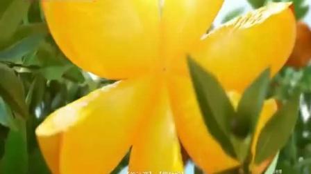 王一博代言美汁源果粒橙广告