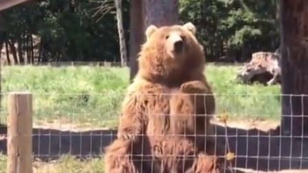 🐻熊,你可以出道了!👍