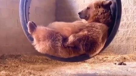 熊🐻,你可以出道了!