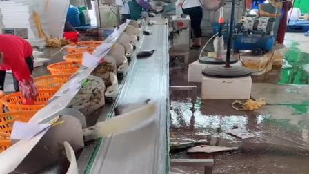 原来鱼是这样分类的,我还是第一次见到这样的流水线,大家见过吗?