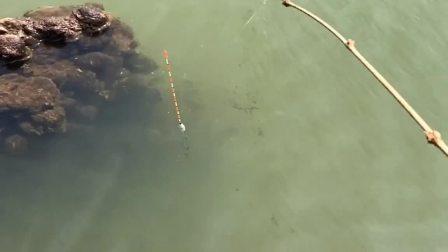 石头下肯定有大货,我刚把鱼钩扔下去就上钩了,果然没让我失望!