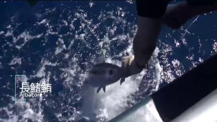 神夺海水碳素线介绍视频
