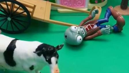 僵尸躺地上,不料被小奶牛识破计划,小奶牛不和僵尸走