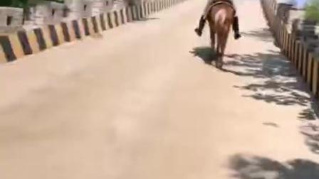 美女骑马24