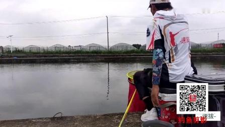 速拔哥钓鲤鱼漂浮颗粒饵料使用技巧,洗手擦手很重要,捏饵挂钩是手法,这样才能上鱼快