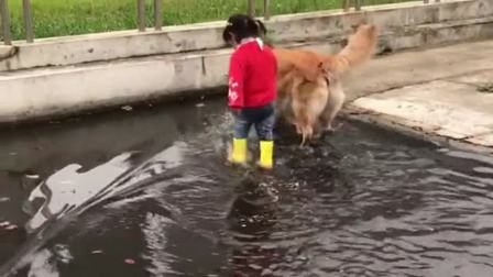 一转眼,狗子又带孩子进水里了,太不让人省心了!