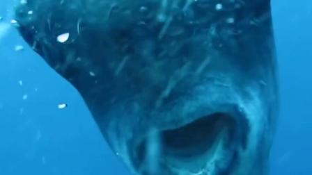 活得最惨的鱼,死法高达100多种!