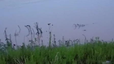 肥西四合抗洪突击队昼夜坚守堤坝,确保万无一失!