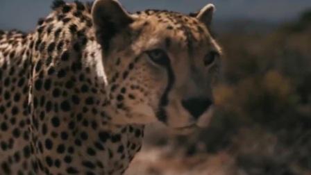 速度超过音速的动物,绝对颠覆你的认知
