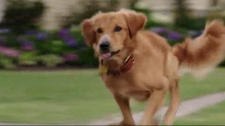 《一条狗的使命》中贝利与伊森有趣的互动