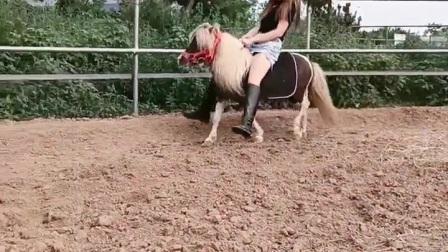 美女骑矮马