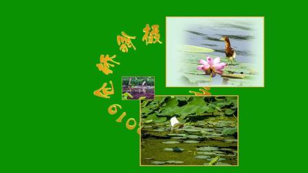 赏荷(5):特异造型缤纷亮相 鸟鱼蛙虫荷塘共乐