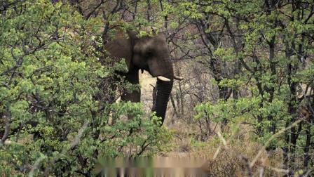 一个大象守护者的故事
