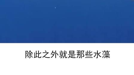 """世界上最危险的""""魔藻之海""""!"""
