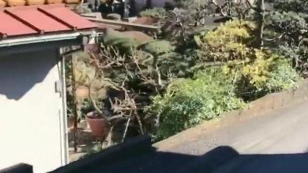 原来这就是日本的大户人家,这园艺跟田园风情让人嫉妒,结果看到松树我笑了