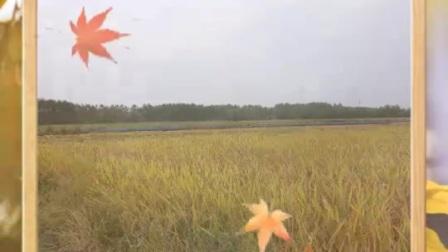 健康快乐彩视作品集:《又是一个丰收年》,2020年中秋国庆双节秋收掠影。