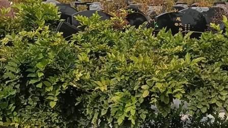 淄博玉皇陵公墓 为客户选择仙地
