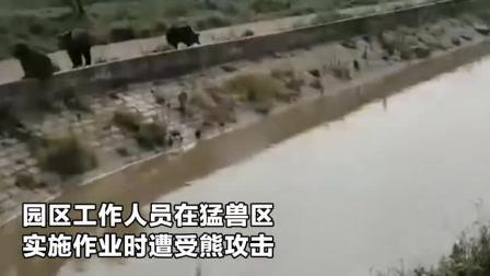 实拍:上海野生动物园超5头熊攻击一饲养员致死 吓坏大巴内游客