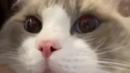 如何哄好一只正在生气的猫咪?在线等,挺急的
