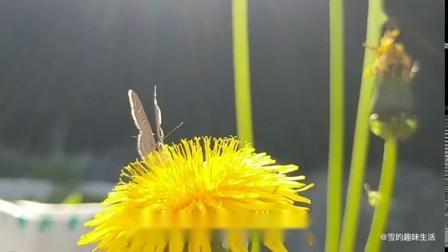 歌曲:蝴蝶与花儿