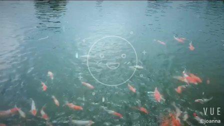 锦鲤鱼鱼乐.mov