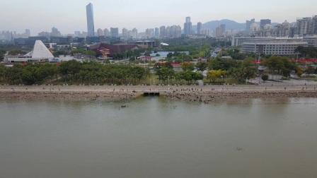 航拍深圳红树林(2020.11.29)
