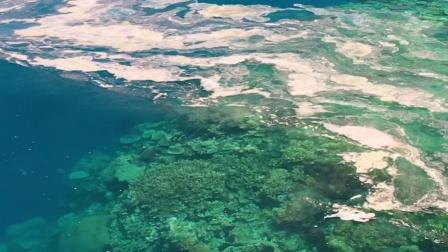 大堡礁的爱情故事