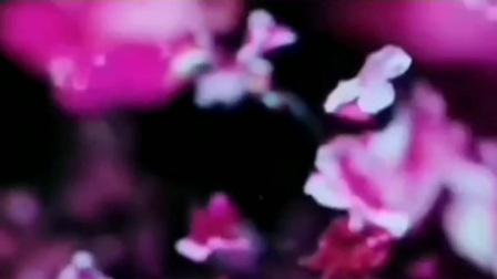 古诗词:王安石《梅花》。唯有春风最相惜,一年一度一归来……朗诵:邢之诺