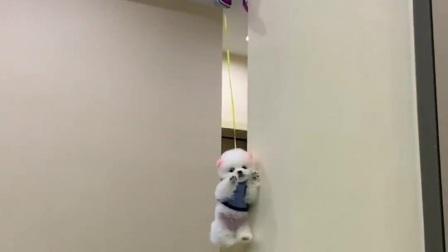 狗狗:我在哪,我是谁,谁来救救我