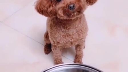 我的天!这狗狗成精了吧?