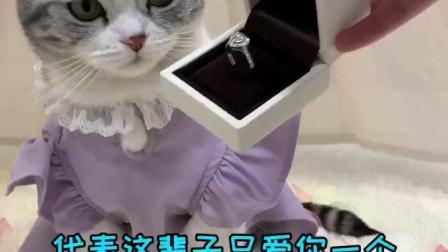 泡芙收到正式求婚了,以后要和安生相亲相爱!