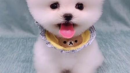 这么可爱的狗狗你喜欢吗?喜欢就讲讲价吧