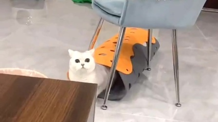 我这个猫居然喝醉了?