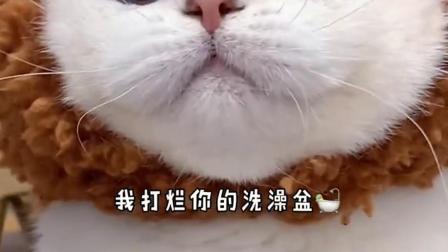 这么奶凶奶凶的小猫咪,你喜欢吗