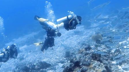 水下摄影海狼群