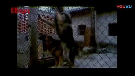 中国老电影-【犬杀】1996_高清