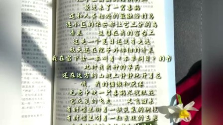 诗歌《喜鹊》作者:胭脂茉莉