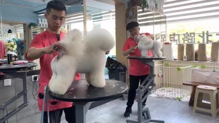 【南京宠物美容培训课堂】南京宠物美容师培训学校!南京专业正规的宠物美容学校!南京宠物美容学校!一诺宠物美容培训机构!