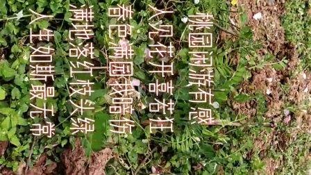 闲游刘氏桃园有感(鲍发明作品)