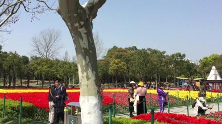 洞箫独奏【女儿情】 大宁郁金香公园 摄影:章银妹 制作演奏:滕宝华 2021年3月25日