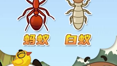 白蚁和蚂蚁是什么关系?