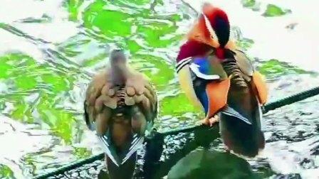 潋滟西湖美景。古诗词:邢之诺《清平乐·依韵》