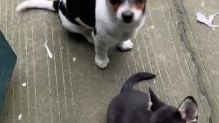 狗狗日常1