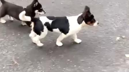 狗狗的日常3