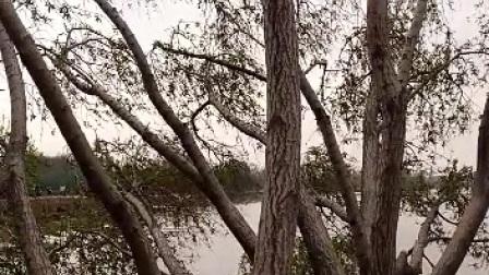黄河之水天上来    走近黄河心欢喜