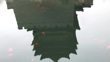 西城墙护城河里的鱼儿在嬉戏