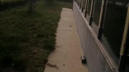 泰安中京小镇流浪猫