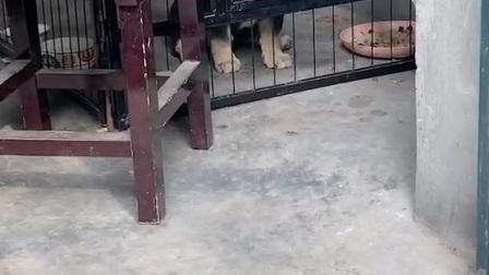 狗狗的日常16