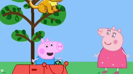 谁才是猪妈妈的宝贝?