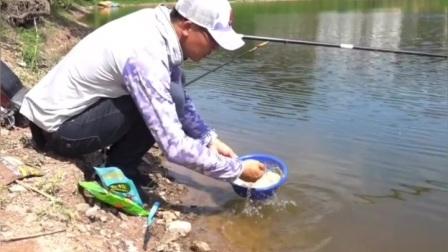 刘志强水库钓大草鱼鲤鱼,高清看漂钓浮钓低钓鱼技巧